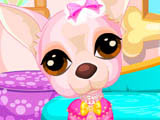 Play Cute Chihuahua Caring