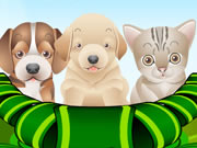 Play Puppy and Kitten Caring Game for Girls